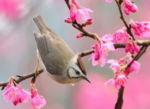 بهار در شعر, شعر بهار نوروز, شعر نو بهار, شعر فصل بهار
