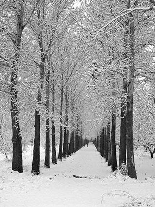شعر زمستان,شعرزمستان,شعر زمستان اخوان,شعر برای زمستان,شعرزمستانی,شعرهای زمستان