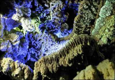 غار علی صدر
